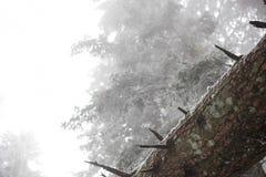 冰冷的森林,在树干的特写镜头 库存图片