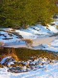 冰冷的池塘在日落的森林 免版税库存照片