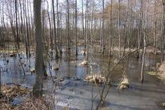 冰冷的沼泽地 免版税库存照片