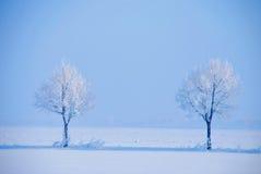 冰冷的结构树 免版税库存图片