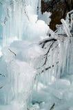 冰冷的结构树 免版税库存照片