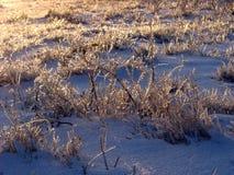 冰冷的草 免版税库存图片
