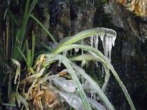 冰冷的草 库存照片