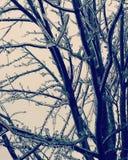 冰冷的结构树 库存照片
