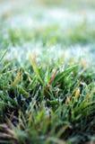 冰冷秋天的草 库存图片