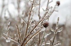冰冷 图库摄影