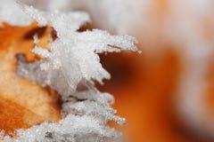 冰叶子冬天 免版税图库摄影