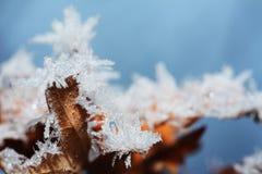 冰叶子冬天 库存图片