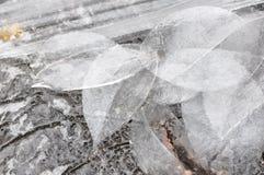 冰叶子 免版税图库摄影