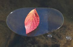 冰和叶子 免版税图库摄影