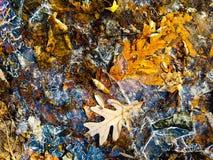 冰和秋天叶子 免版税库存照片