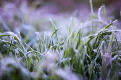 冰和草 免版税库存照片
