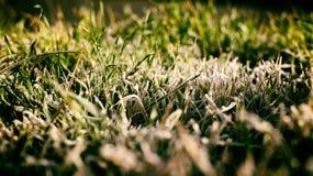 冰和草 库存照片