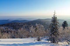 冰和雪世界风景  免版税库存照片