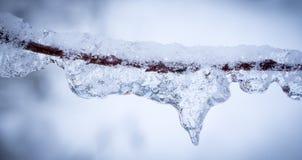 冰和雪在树枝 免版税图库摄影
