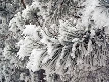 冰在冬时的一个树枝。 免版税库存照片