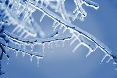 结冰在冰分支 库存图片