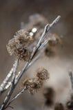 冰在冰暴以后的被复的植物名 免版税图库摄影