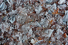 结冰在地面 库存图片