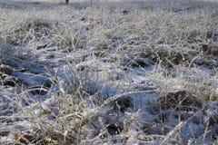 冰在草 冻秸杆 库存照片