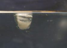 冰块在水中 库存图片