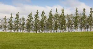 冰岛。南区域。绿色领域和树。 免版税图库摄影