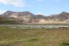 冰岛夏天风景。 免版税库存图片