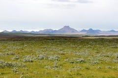 冰岛夏天风景。 免版税库存照片