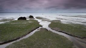 冰岛海运 免版税图库摄影