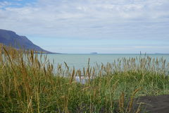 冰岛海滩在北部冰岛 库存照片
