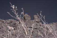 冰岛熔岩岩石 免版税库存照片
