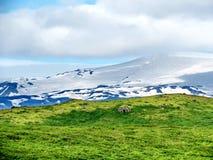 冰岛Skaftafell国家公园与山20的风景 库存图片