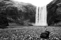 冰岛skogafoss瀑布 免版税库存照片