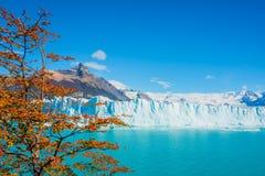 冰川佩里托莫雷诺看法在巴塔哥尼亚的 库存照片