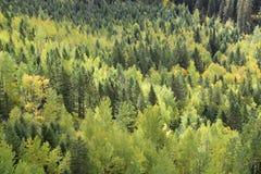 冰川国家公园秋天颜色 图库摄影