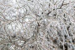 冰川覆盖的枝杈 库存照片