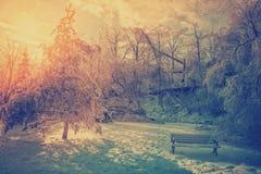 冰川覆盖的树和公园长椅 免版税库存图片