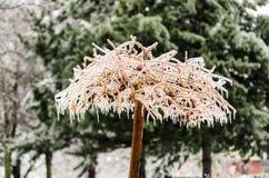 冰川覆盖的树在公园 免版税库存图片