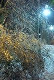 冰川覆盖的树在夜城市公园。 库存照片