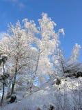 冰川覆盖的结构树在冬天 库存照片