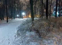 冰川覆盖的结构树在晚上城市公园。 库存照片