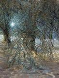 冰川覆盖的结构树在晚上城市公园。 图库摄影