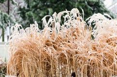 冰川覆盖的草在公园 免版税图库摄影