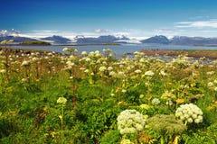 冰川风景从赫本,冰岛的 免版税库存照片