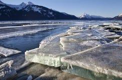 冰平板在Chilkat出海口 免版税库存图片