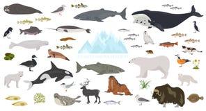 冰床和极性沙漠生物群系 地球生态系世界地图 北极动物、鸟、鱼和植物infographic设计 皇族释放例证