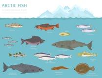 冰床和极性沙漠生物群系 地球生态系世界地图 北极动物、鸟、鱼和植物infographic设计 向量例证