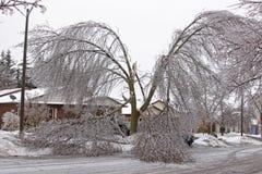 冰损坏的树 免版税库存图片