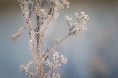 冰晶显示美好在金黄早晨阳光反对蓝色背景 免版税库存照片