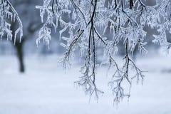 冰暴 免版税图库摄影